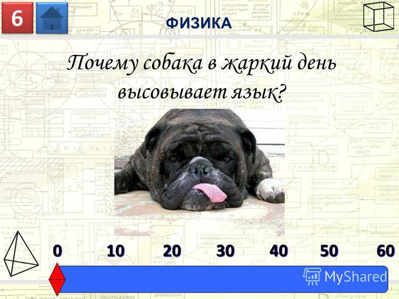 Почему собака в жаркий день высовывает язык? ФИЗИКА 6 6 0603010204050