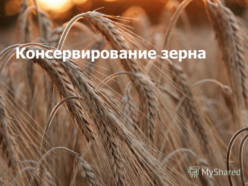 Консервирование зерна