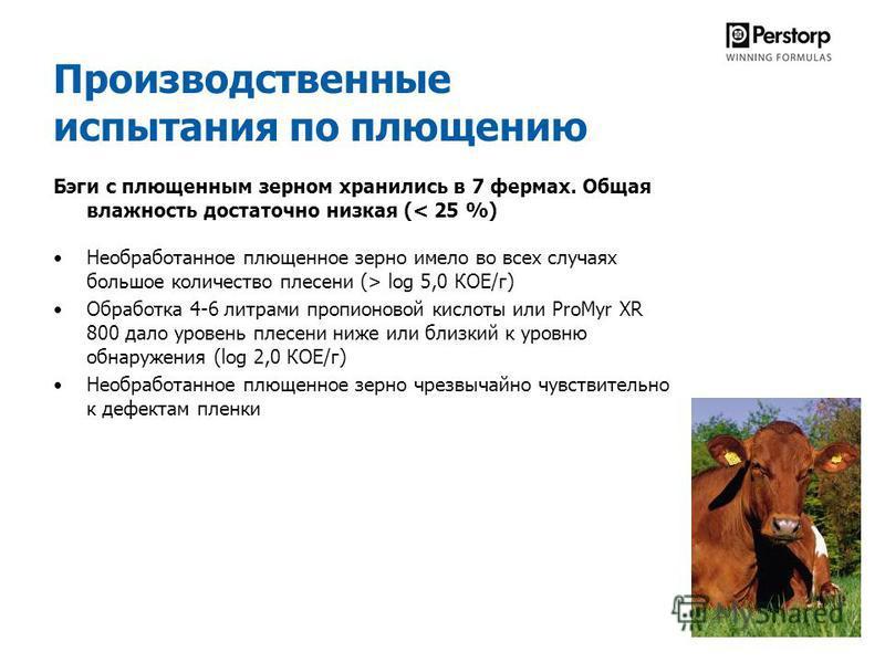 Производственные испытания по плющению Бэги с плющенным зерном хранились в 7 фермах. Общая влажность достаточно низкая (< 25 %) Необработанное плющенное зерно имело во всех случаях большое количество плесени (> log 5,0 КОЕ/г) Обработка 4-6 литрами пр