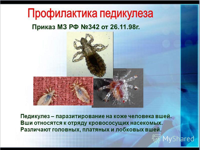 Приказ МЗ РФ 342 от 26.11.98 г. Педикулез – паразитирование на коже человека вшей. Вши относятся к отряду кровососущих насекомых. Различают головных, платяных и лобковых вшей.