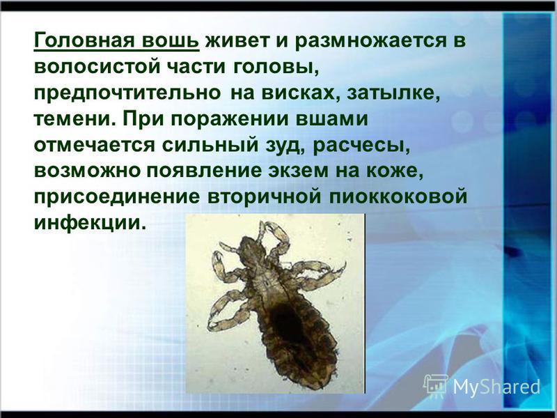 Головная вошь живет и размножается в волосистой части головы, предпочтительно на висках, затылке, темени. При поражении вшами отмечается сильный зуд, расчесы, возможно появление экзем на коже, присоединение вторичной пиоккоковой инфекции.