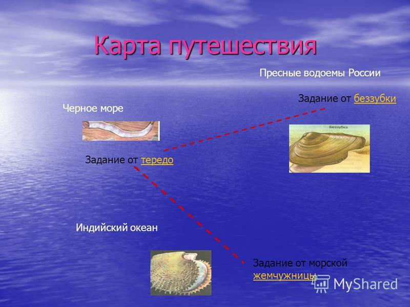 Карта путешествия Задание от беззубки Задание от тередотередо Задание от морской жемчужницы Пресные водоемы России Черное море Индийский океан