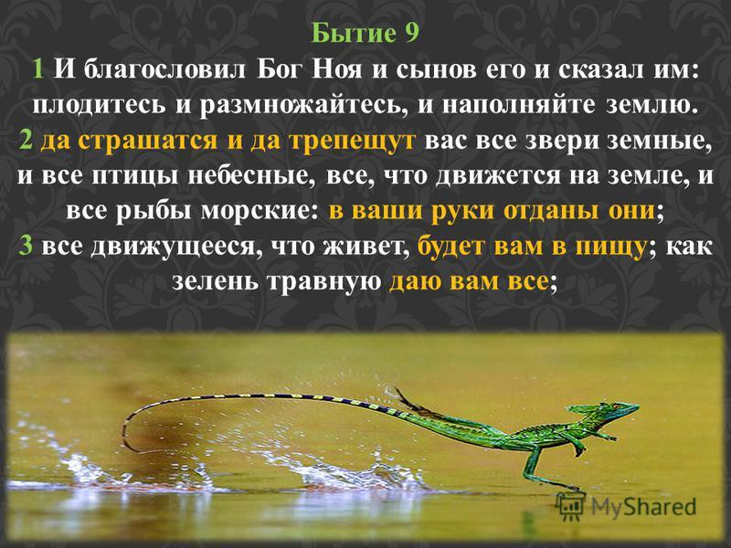 Бытие 9 1 И благословил Бог Ноя и сынов его и сказал им: плодитесь и размножайтесь, и наполняйте землю. 2 да страшатся и да трепещут вас все звери земные, и все птицы небесные, все, что движется на земле, и все рыбы морские: в ваши руки отданы они; 3