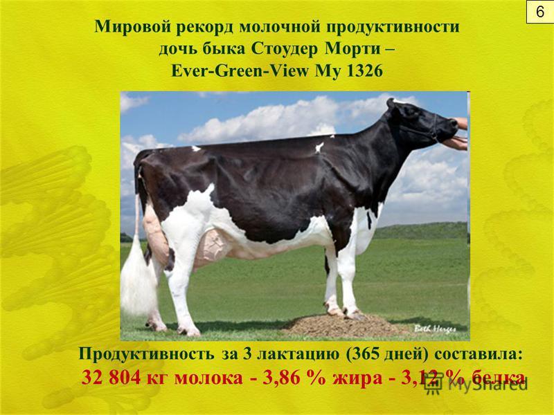 Мировой рекорд молочной продуктивности дочь быка Стоудер Морти – Ever-Green-View My 1326 Продуктивность за 3 лактацию (365 дней) составила: 32 804 кг молока - 3,86 % жира - 3,12 % белка 6
