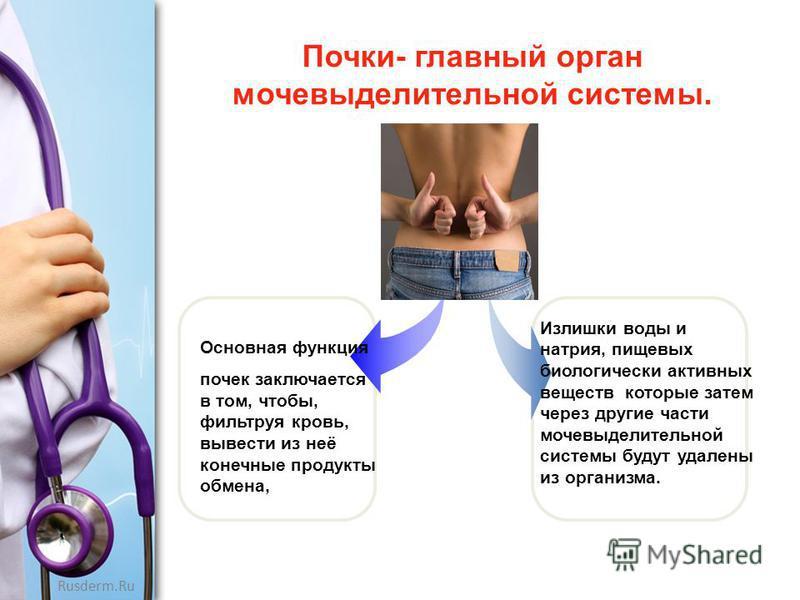 Rusderm.Ru Почки- главный орган мочевыделительной системы. Основная функция почек заключается в том, чтобы, фильтруя кровь, вывести из неё конечные продукты обмена, Излишки воды и натрия, пищевых биологически активных веществ которые затем через друг