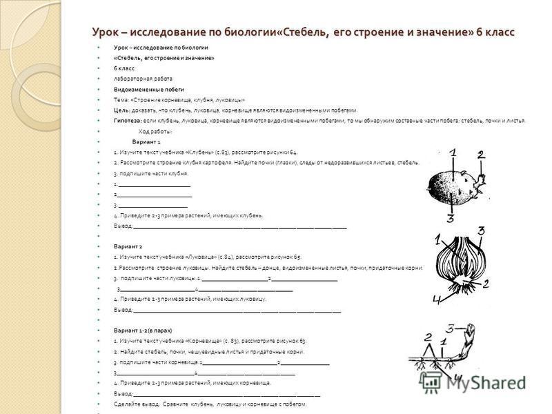 Урок – исследование по биологии « Стебель, его строение и значение » 6 класс Урок – исследование по биологии « Стебель, его строение и значение » 6 класс лабораторная работа Видоизмененные побеги Тема : « Строение корневища, клубня, луковицы » Цель :