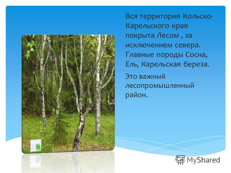 Вся территория Кольско- Карельского края покрыта Лесом, за исключением севера. Главные породы Сосна, Ель, Карельская береза. Это важный лесопромышленный район.