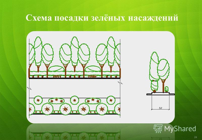 Схема посадки зелёных насаждений 24