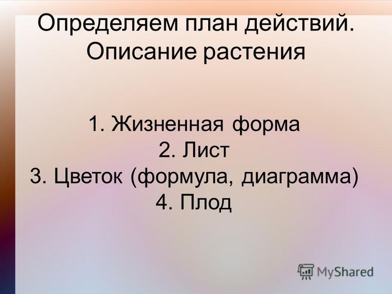 Определяем план действий. Описание растения 1. Жизненная форма 2. Лист 3. Цветок (формула, диаграмма) 4. Плод
