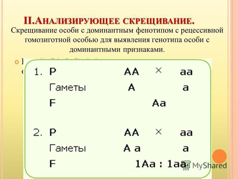 II.А НАЛИЗИРУЮЩЕЕ СКРЕЩИВАНИЕ. Скрещивание особи с доминантным фенотипом с рецессивной гомозиготной особью для выявления генотипа особи с доминантными признаками. http://wiki.vladimir.i- edu.ru/images/7/72/138395.gif