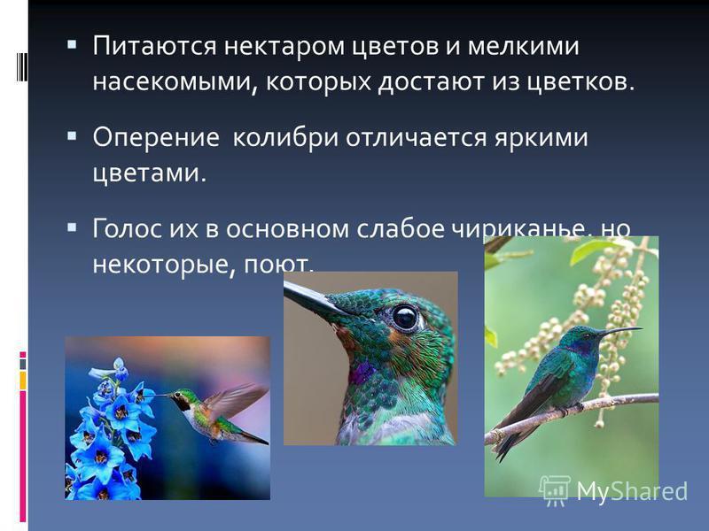 Питаются нектаром цветов и мелкими насекомыми, которых достают из цветков. Оперение колибри отличается яркими цветами. Голос их в основном слабое чириканье, но некоторые, поют.