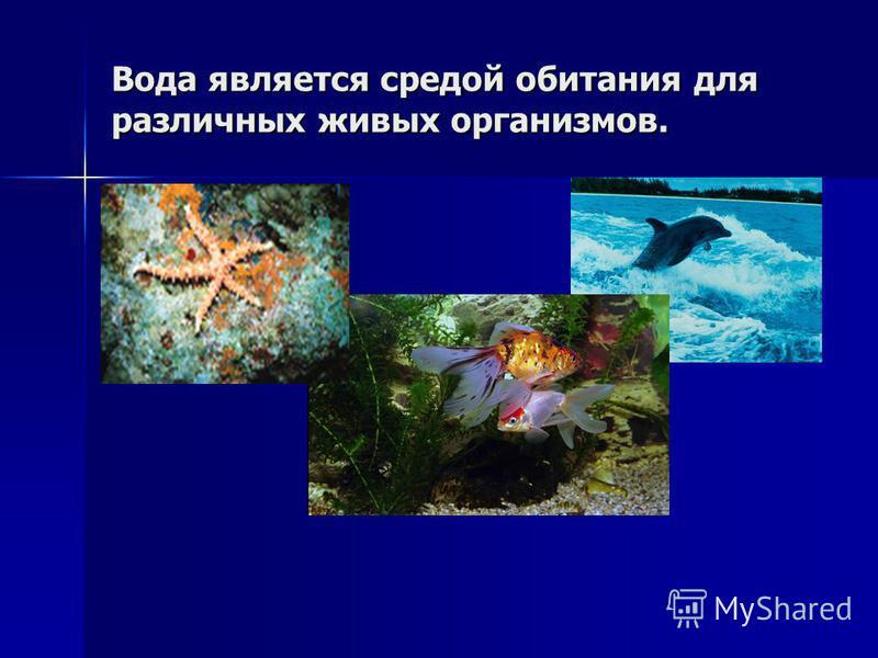Вода является средой обитания для различных живых организмов.