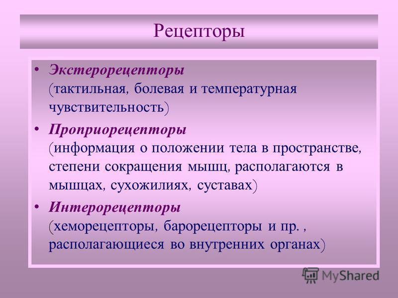 Рецепторы Экстерорецепторы ( тактильная, болевая и температурная чувствительность ) Проприорецепторы ( информация о положении тела в пространстве, степени сокращения мышц, располагаются в мышцах, сухожилиях, суставах ) Интерорецепторы ( хеморецепторы