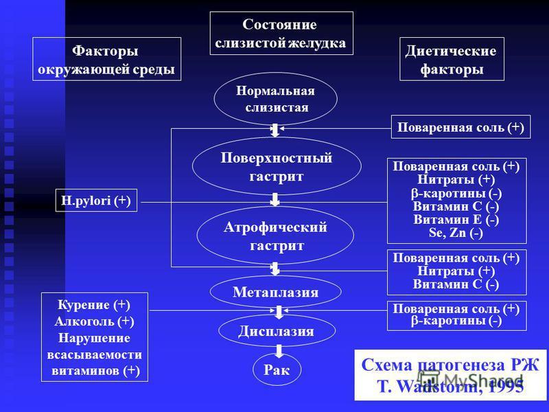 Факторы окружающей среды Состояние слизистой желудка Диетические факторы H.pylori (+) Курение (+) Алкоголь (+) Нарушение всасываемости витаминов (+) Поваренная соль (+) Нитраты (+) -каротины (-) Витамин С (-) Витамин Е (-) Se, Zn (-) Поваренная соль