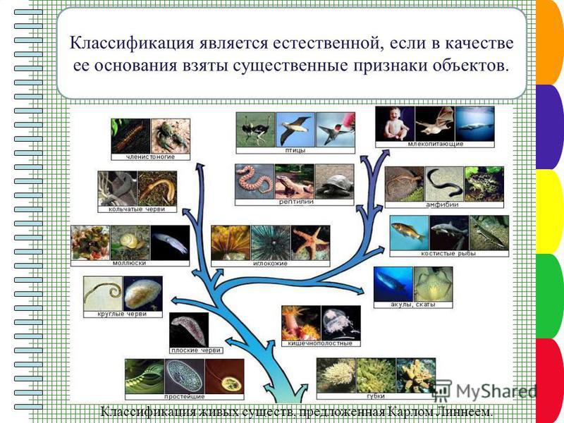 Классификация является естественной, если в качестве ее основания взяты существенные признаки объектов. Классификация живых существ, предложенная Карлом Линнеем.
