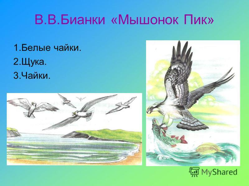 В.В.Бианки «Мышонок Пик» 1. Белые чайки. 2.Щука. 3.Чайки.