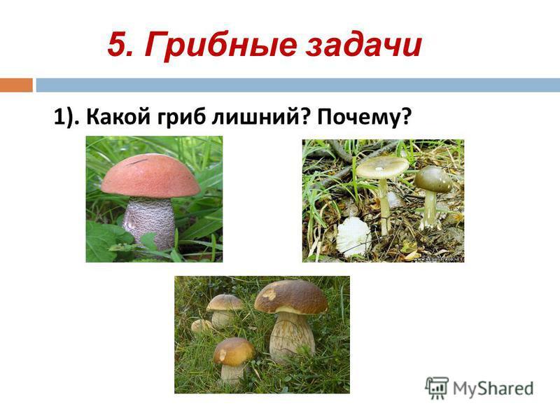 5. Грибные задачи 1). Какой гриб лишний ? Почему ?