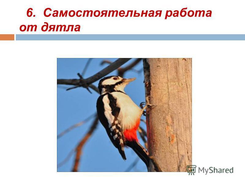 6. Самостоятельная работа от дятла