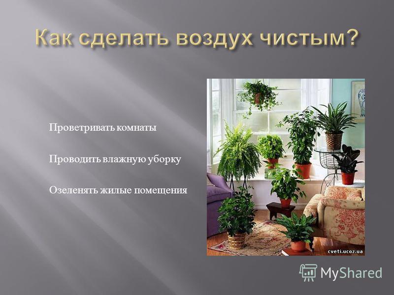 Проветривать комнаты Проводить влажную уборку Озеленять жилые помещения