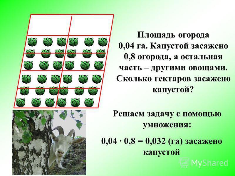 Площадь огорода 0,04 га. Капустой засажено 0,8 огорода, а остальная часть – другими овощами. Сколько гектаров засажено капустой? Решаем задачу с помощью умножения: 0,04 0,8 = 0,032 (га) засажено капустой