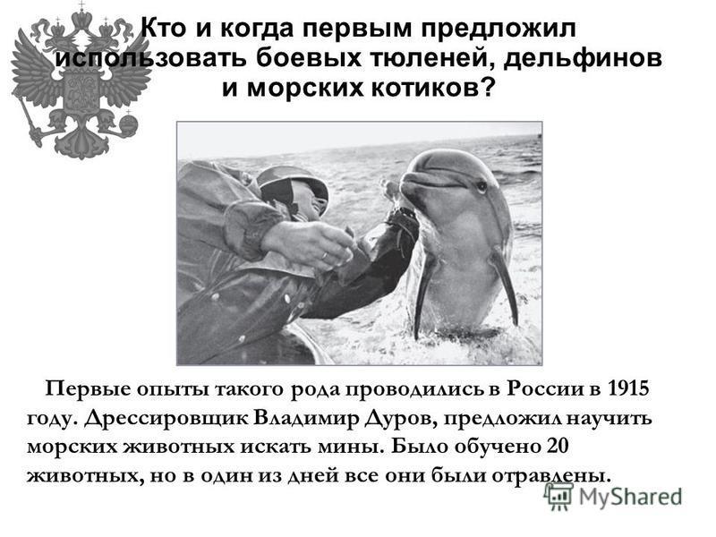 Кто и когда первым предложил использовать боевых тюленей, дельфинов и морских котиков? Первые опыты такого рода проводились в России в 1915 году. Дрессировщик Владимир Дуров, предложил научить морских животных искать мины. Было обучено 20 животных, н