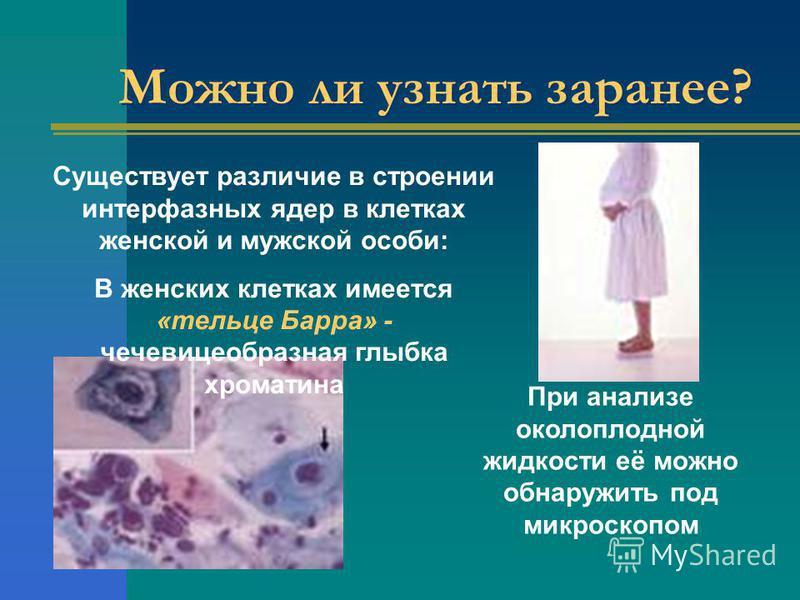 Можно ли узнать заранее? Существует различие в строении интерфазных ядер в клетках женской и мужской особи: В женских клетках имеется «тельце Барра» - чечевицеобразная глыбка хроматина При анализе околоплодной жидкости её можно обнаружить под микроск