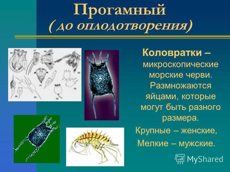 Прогамный ( до оплодотворения) Коловратки – микроскопические морские черви. Размножаются яйцами, которые могут быть разного размера. Крупные – женские, Мелкие – мужские.