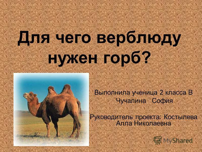 Для чего верблюду нужен горб? Выполнила ученица 2 класса В Чучалина София Руководитель проекта: Костылева Алла Николаевна