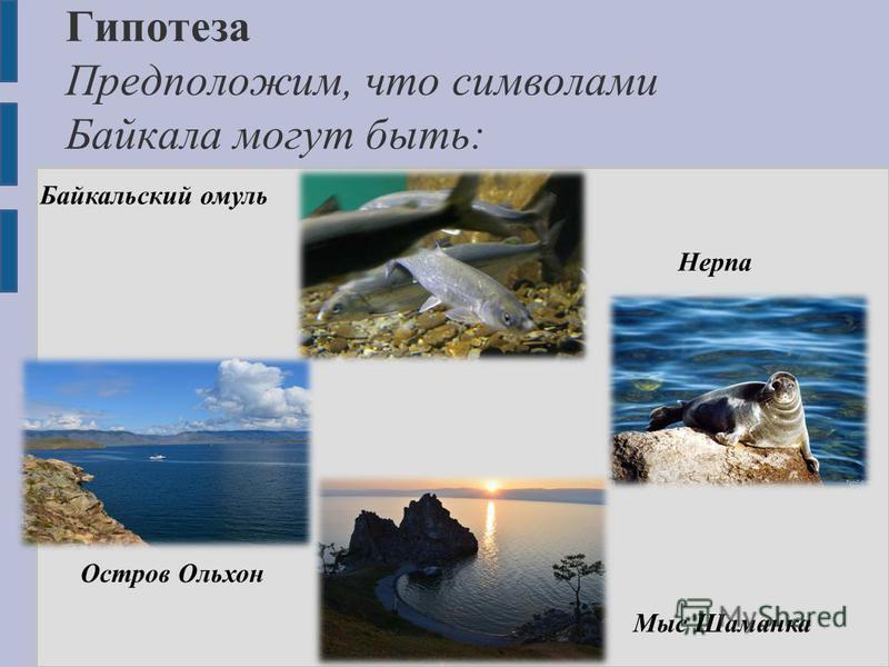 Гипотеза Предположим, что символами Байкала могут быть: Остров Ольхон Мыс Шаманка Байкальский омуль Нерпа