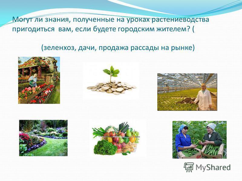 Могут ли знания, полученные на уроках растениеводства пригодиться вам, если будете городским жителем? (