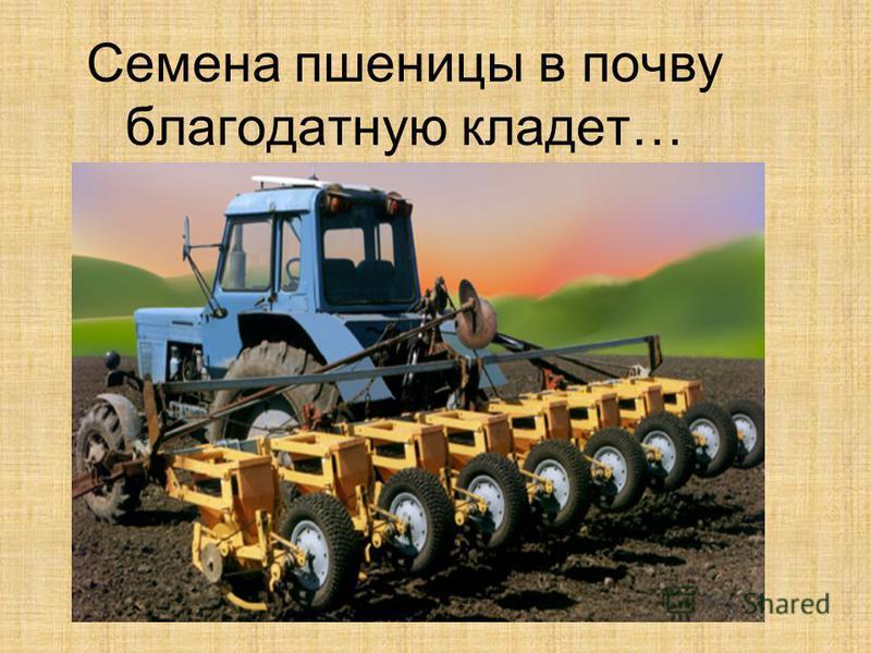 Семена пшеницы в почву благодатную кладет…