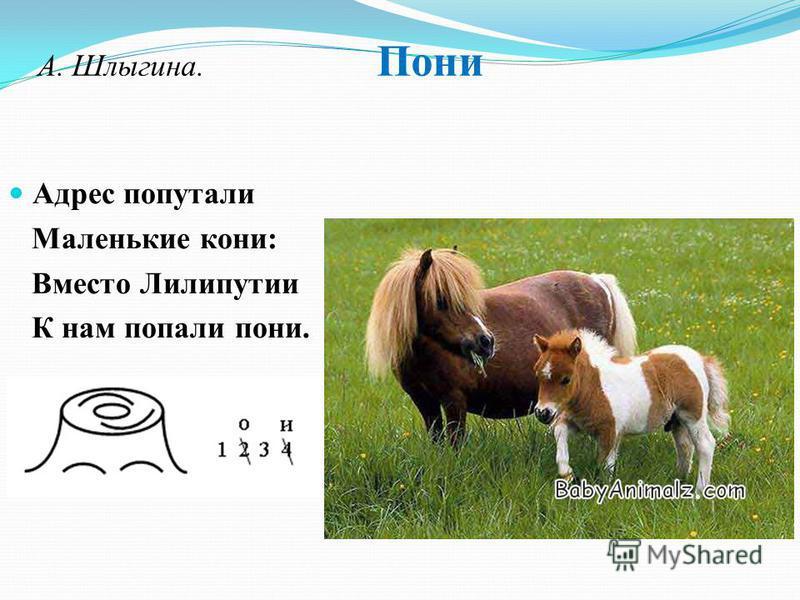 А. Шлыгина. Пони Адрес попутали Маленькие кони: Вместо Лилипутии К нам попали пони.
