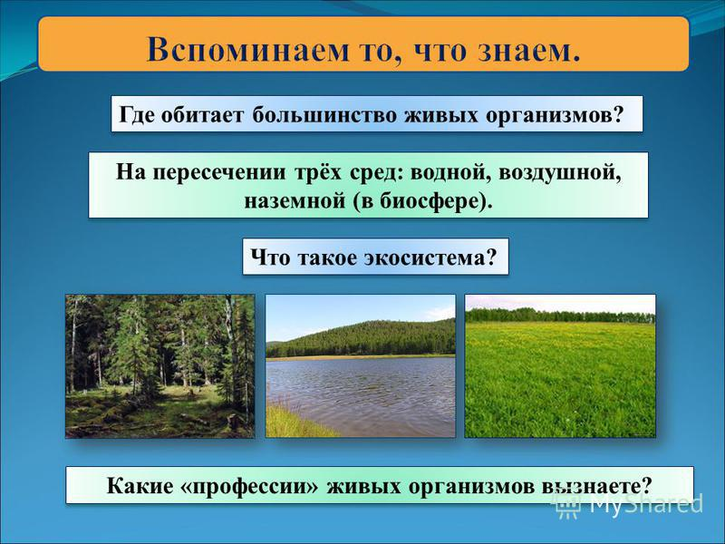 Где обитает большинство живых организмов? Что такое экосистема? Какие «профессии» живых организмов вызнаете? На пересечении трёх сред: водной, воздушной, наземной (в биосфере).