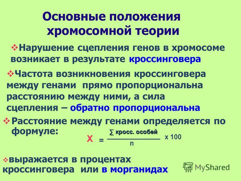 Основные положения хромосомной теории Расстояние между генами определяется по формуле: Х = кросс. особей n х 100 Нарушение сцепления генов в хромосоме возникает в результате кроссинговера Частота возникновения кроссинговера между генами прямо пропорц