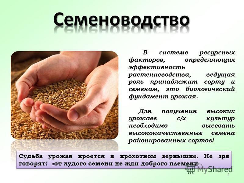 В системе ресурсных факторов, определяющих эффективность растениеводства, ведущая роль принадлежит сорту и семенам, это биологический фундамент урожая. Для получения высоких урожаев с/х культур необходимо высевать высококачественные семена районирова