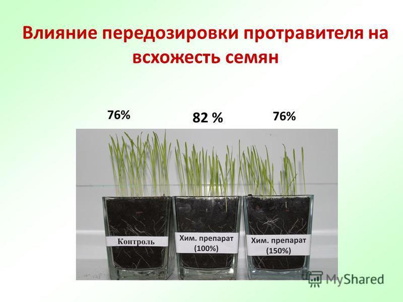Влияние передозировки протравителя на всхожесть семян 82 % 76%