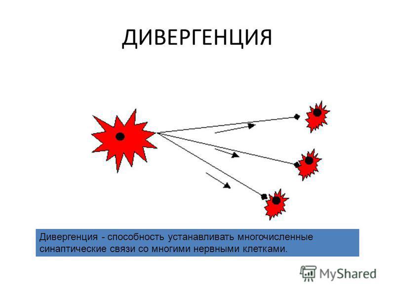 ДИВЕРГЕНЦИЯ Дивергенция - способность устанавливать многочисленные синаптические связи со многими нервными клетками.