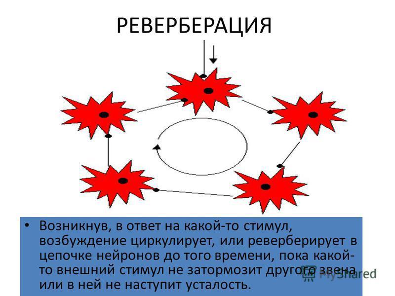 РЕВЕРБЕРАЦИЯ Возникнув, в ответ на какой-то стимул, возбуждение циркулирует, или реверберирует в цепочке нейронов до того времени, пока какой- то внешний стимул не затормозит другого звена или в ней не наступит усталость.
