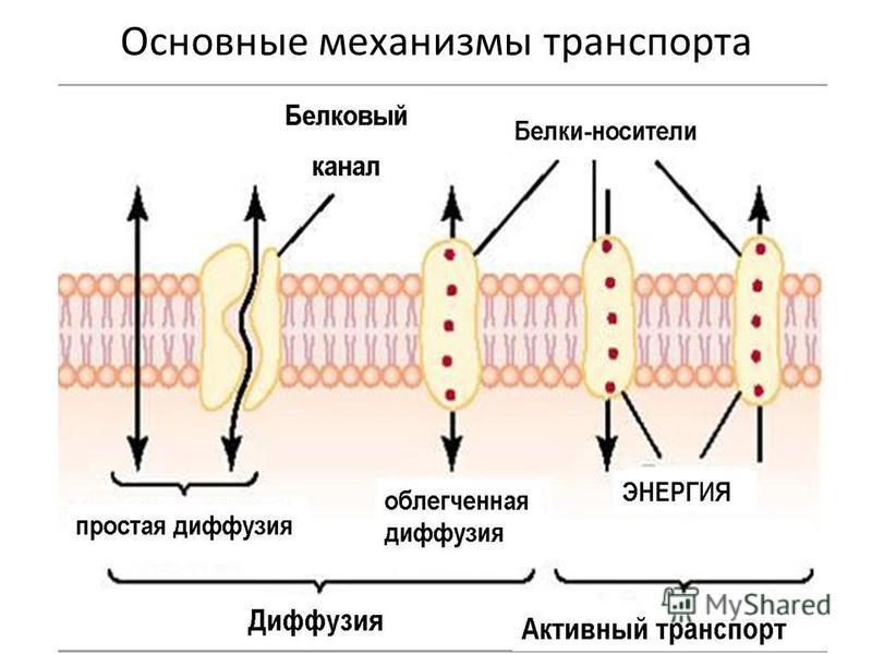 Основные механизмы транспорта