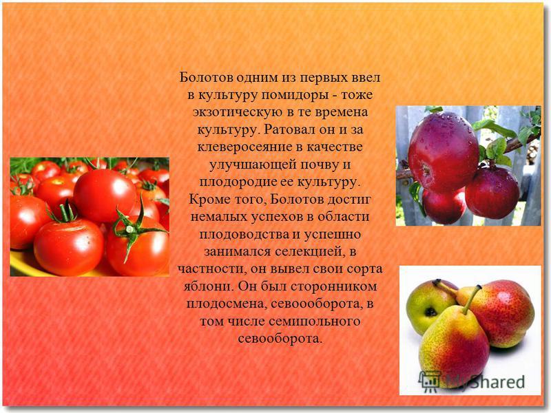 Болотов одним из первых ввел в культуру помидоры - тоже экзотическую в те времена культуру. Ратовал он и за клеверосеяние в качестве улучшающей почву и плодородие ее культуру. Кроме того, Болотов достиг немалых успехов в области плодоводства и успешн