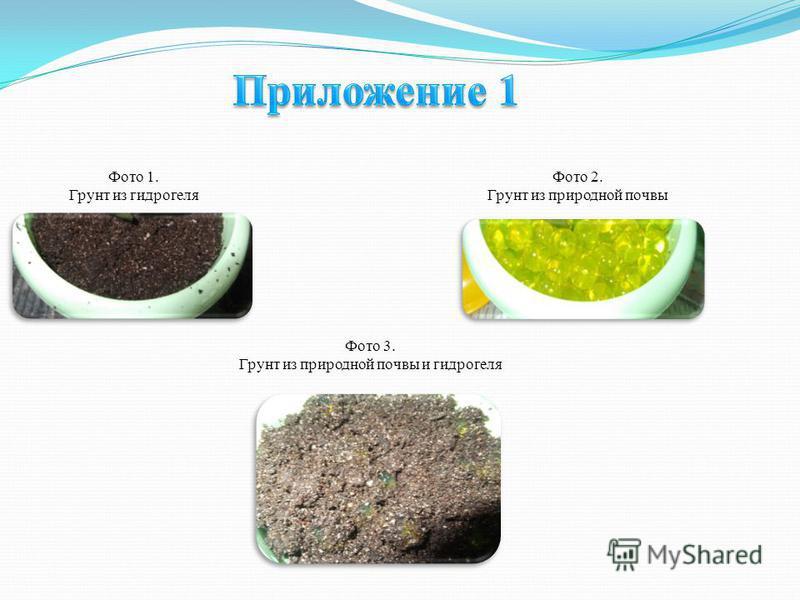 Фото 1. Грунт из гидрогеля Фото 2. Грунт из природной почвы Фото 3. Грунт из природной почвы и гидрогеля
