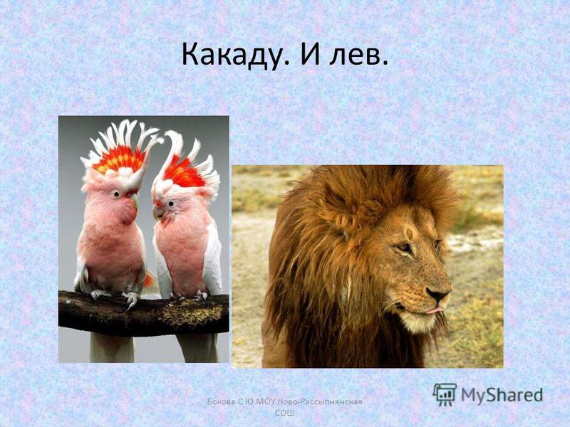 Какаду. И лев. Бокова С Ю МОУ Ново-Рассыпнянская СОШ