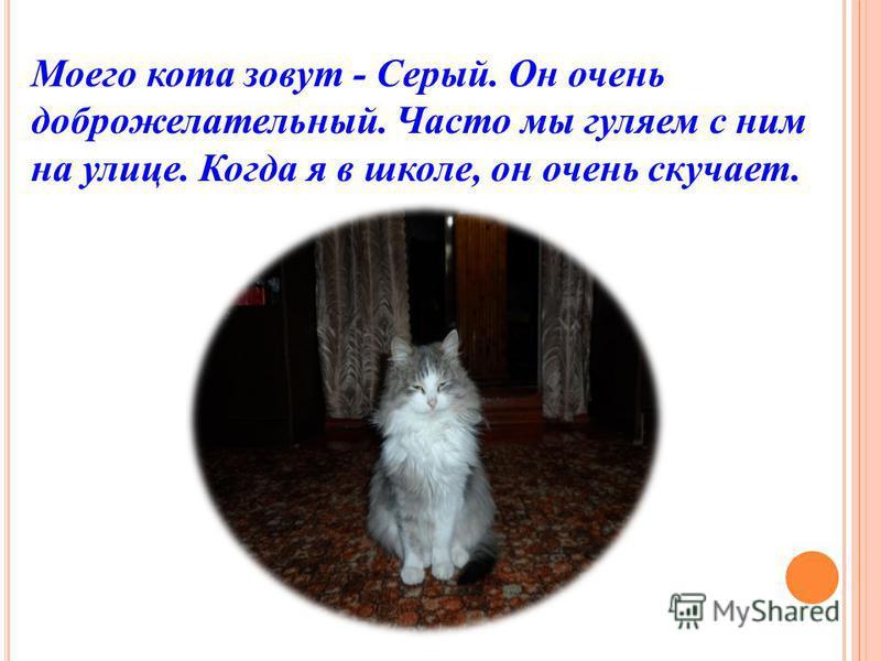Моего кота зовут - Серый. Он очень доброжелательный. Часто мы гуляем с ним на улице. Когда я в школе, он очень скучает.