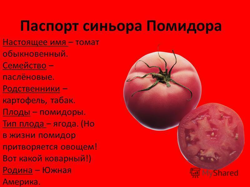 Паспорт синьора Помидора Настоящее имя – томат обыкновенный. Семейство – паслёновые. Родственники – картофель, табак. Плоды – помидоры. Тип плода – ягода. (Но в жизни помидор притворяется овощем! Вот какой коварный!) Родина – Южная Америка.