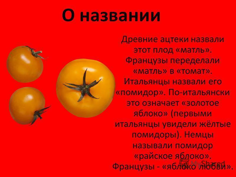 О названии Древние ацтеки назвали этот плод «матль». Французы переделали «матль» в «томат». Итальянцы назвали его «помидор». По-итальянски это означает «золотое яблоко» (первыми итальянцы увидели жёлтые помидоры). Немцы называли помидор «райское ябло