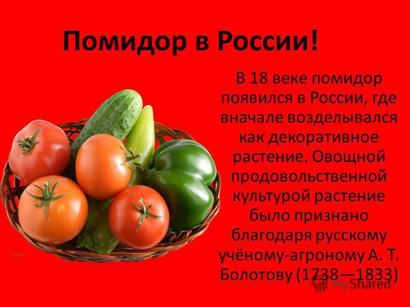 Помидор в России! В 18 веке помидор появился в России, где вначале возделывался как декоративное растение. Овощной продовольственной культурой растение было признано благодаря русскому учёному-агроному А. Т. Болотову (17381833)
