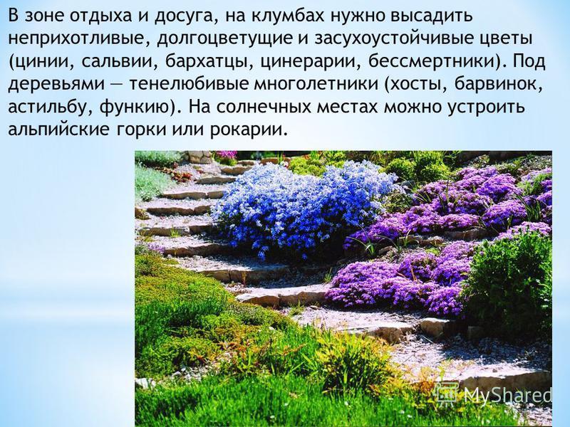 В зоне отдыха и досуга, на клумбах нужно высадить неприхотливые, долгоцветущие и засухоустойчивые цветы (цинии, сальвии, бархатцы, цинерарии, бессмертники). Под деревьями тенелюбивые многолетники (хосты, барвинок, астильбу, функию). На солнечных мест
