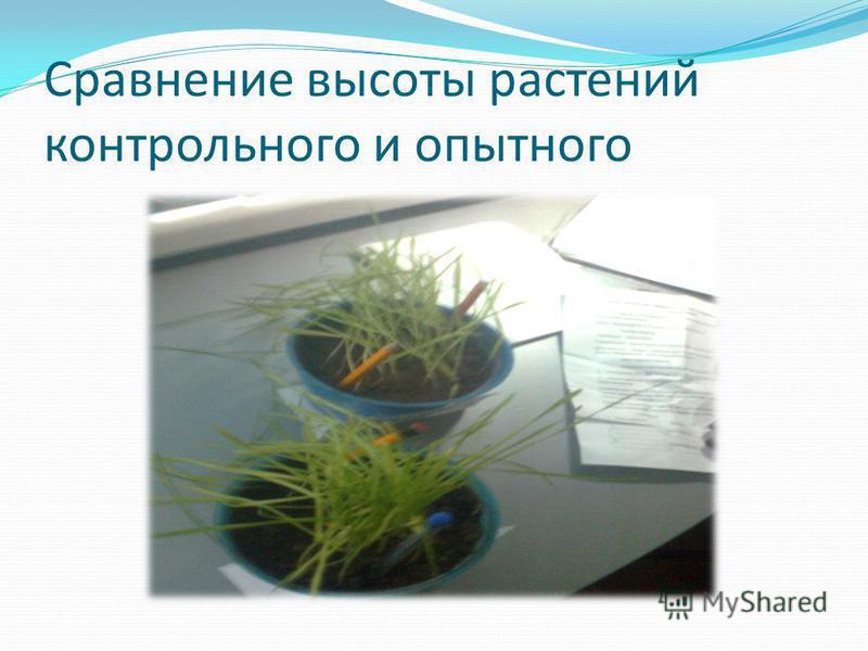Сравнение высоты растений контрольного и опытного