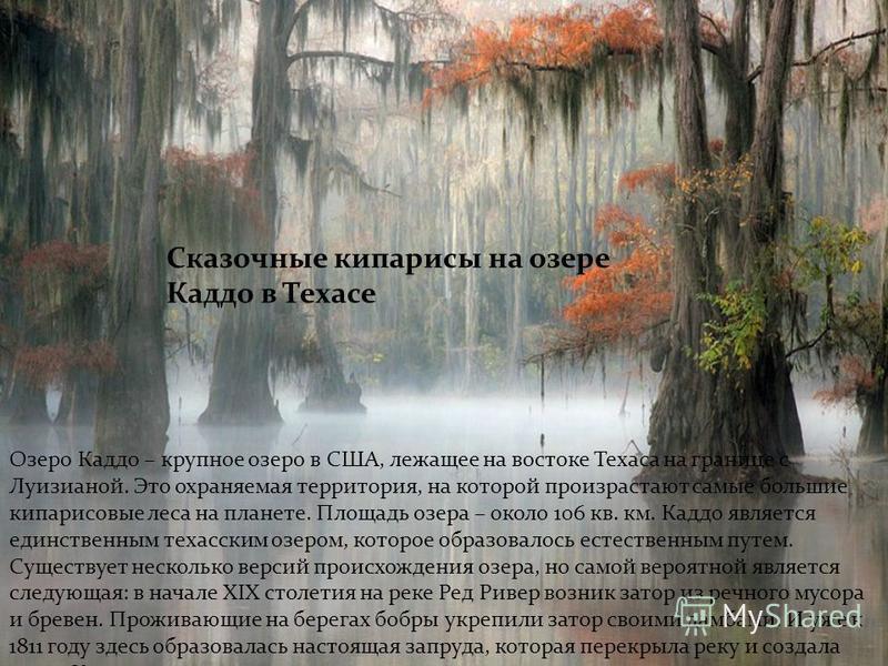 Сказочные кипарисы на озере Каддо в Техасе Озеро Каддо – крупное озеро в США, лежащее на востоке Техаса на границе с Луизианой. Это охраняемая территория, на которой произрастают самые большие кипарисовые леса на планете. Площадь озера – около 106 кв