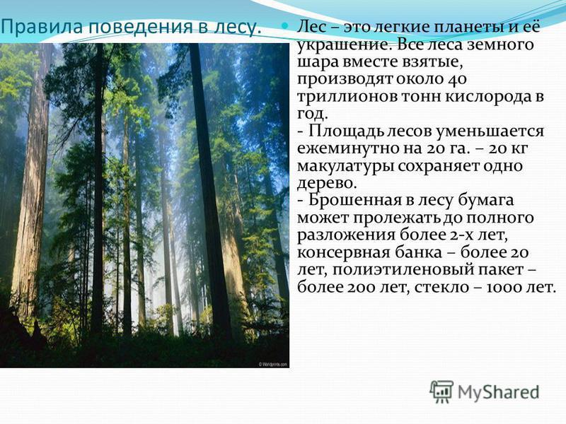 Правила поведения в лесу. Лес – это легкие планеты и её украшение. Все леса земного шара вместе взятые, производят около 40 триллионов тонн кислорода в год. - Площадь лесов уменьшается ежеминутно на 20 га. – 20 кг макулатуры сохраняет одно дерево. -